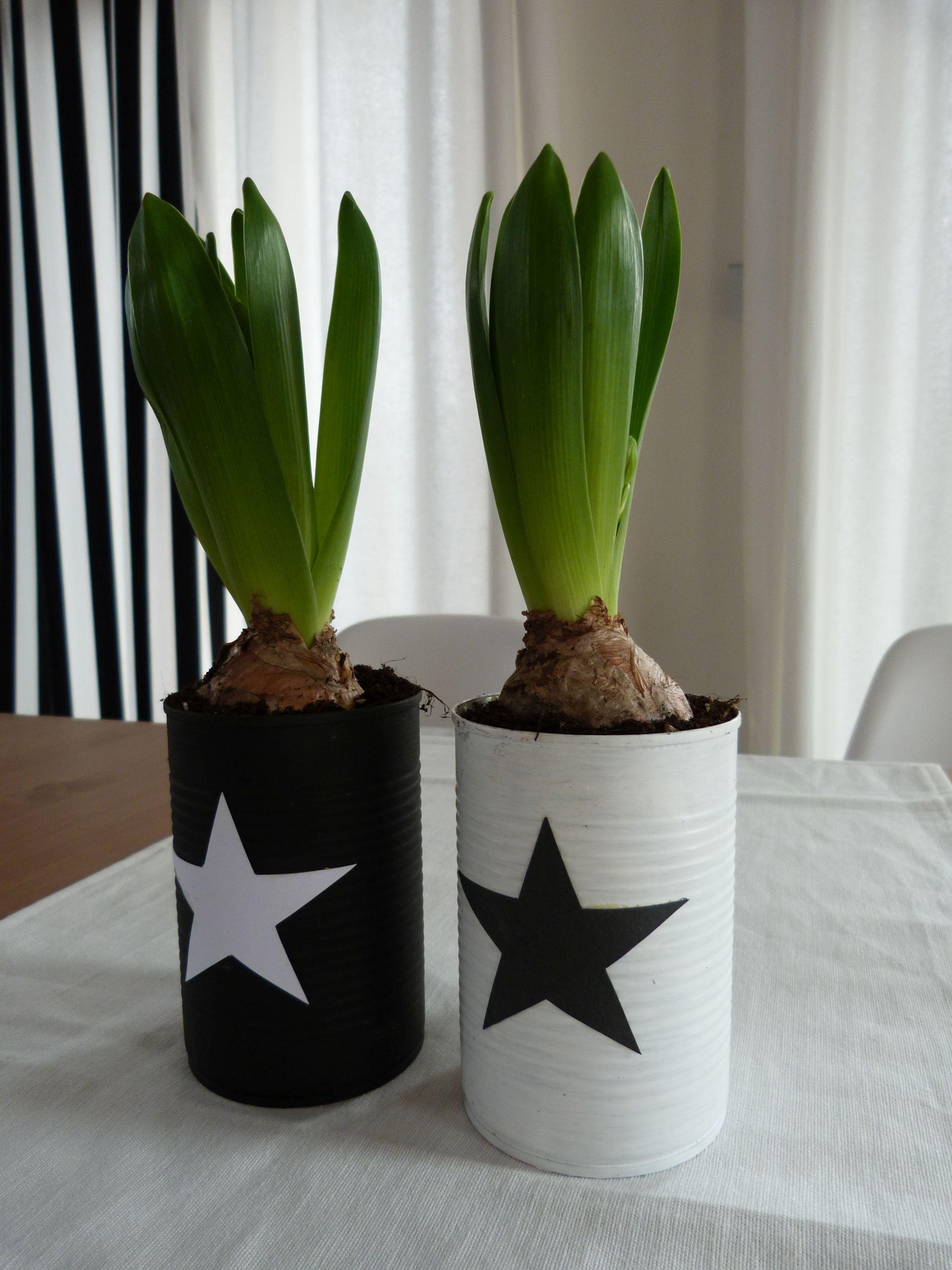 Dekorace - rostliny