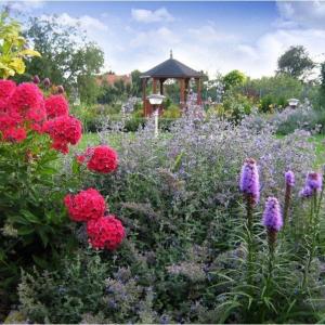 Debutová záhrada