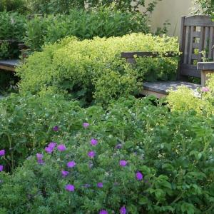 Farská záhrada