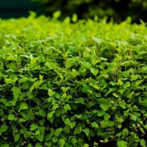 Čím oplotiť záhradu? Možnosťou sú kamene, živé ploty či gabiónové koše