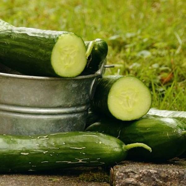 Pestovanie uhoriek: Od semienka po bohatú úrodu