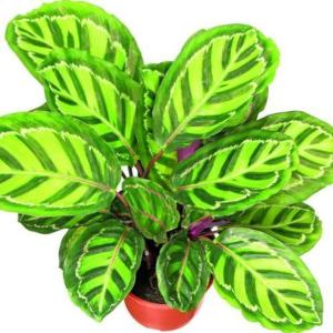 Inteligentné rastliny pre zdravé bývanie