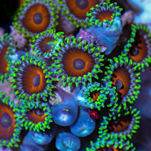 Famózne farby korálov
